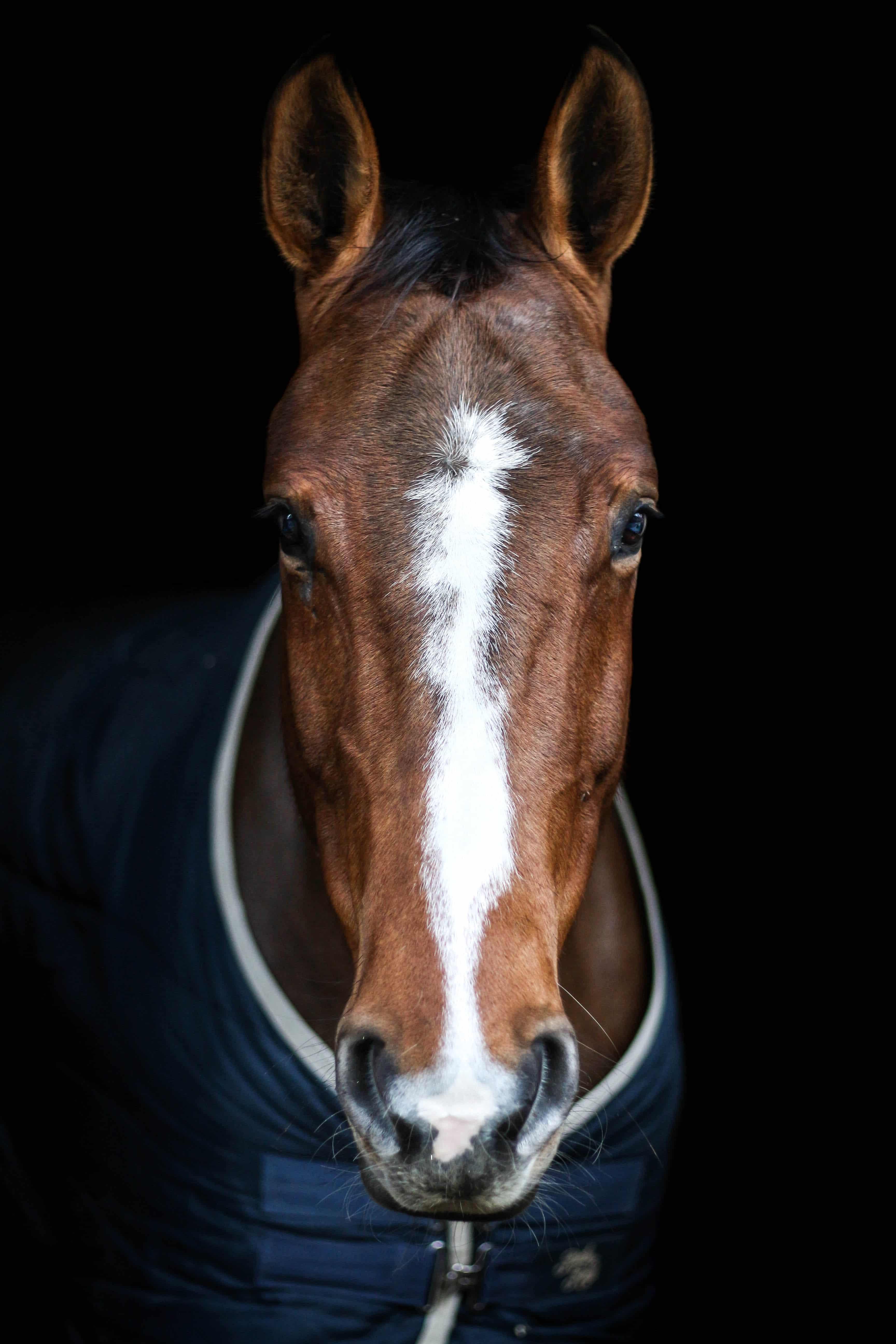 fond noir magazine cheval
