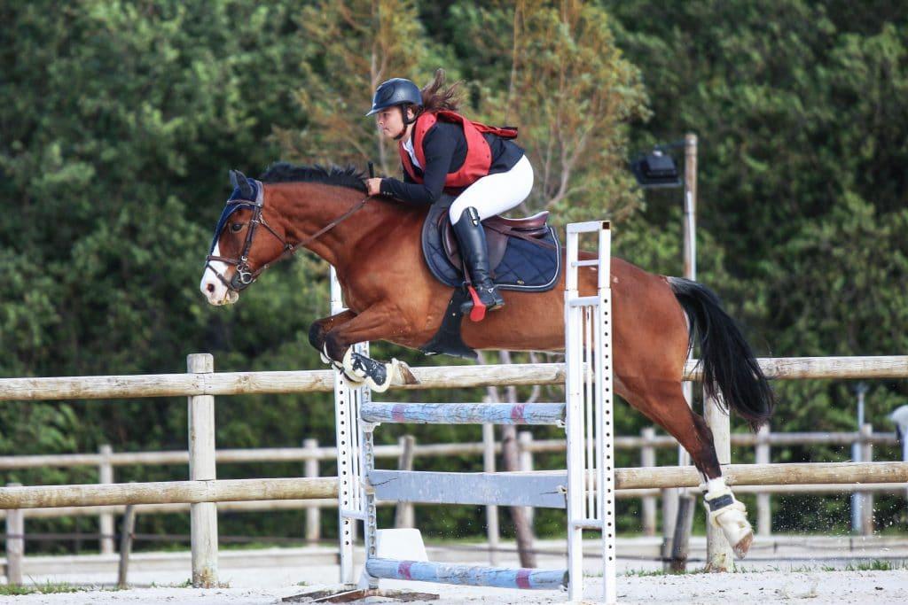 suivi concours chevaux