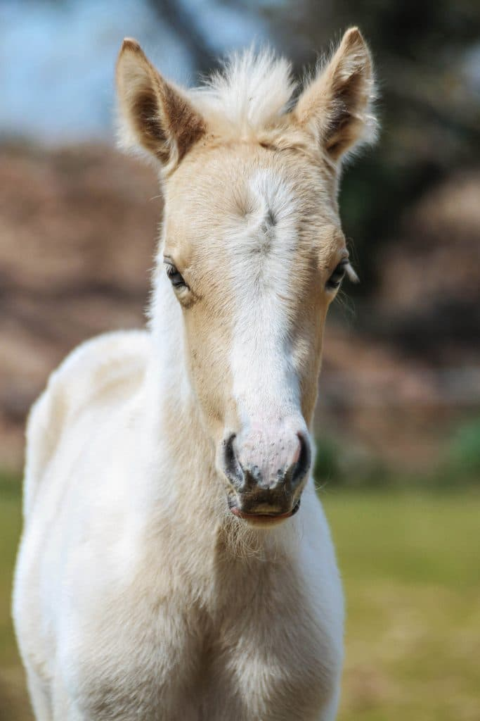 valorisation metier chevaux