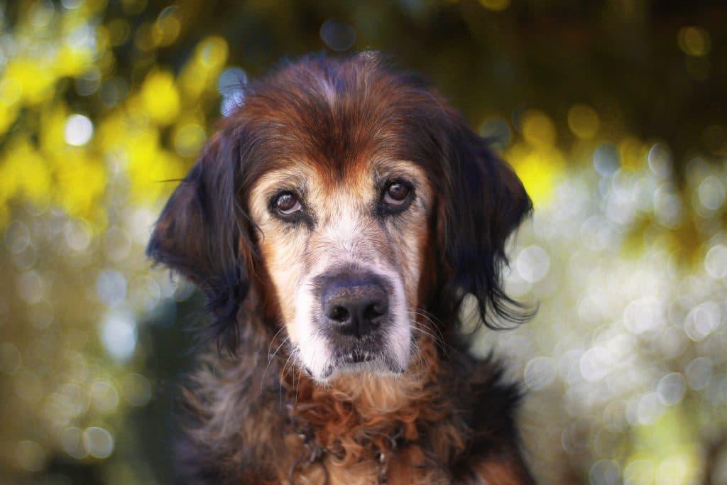 photo-canine-var