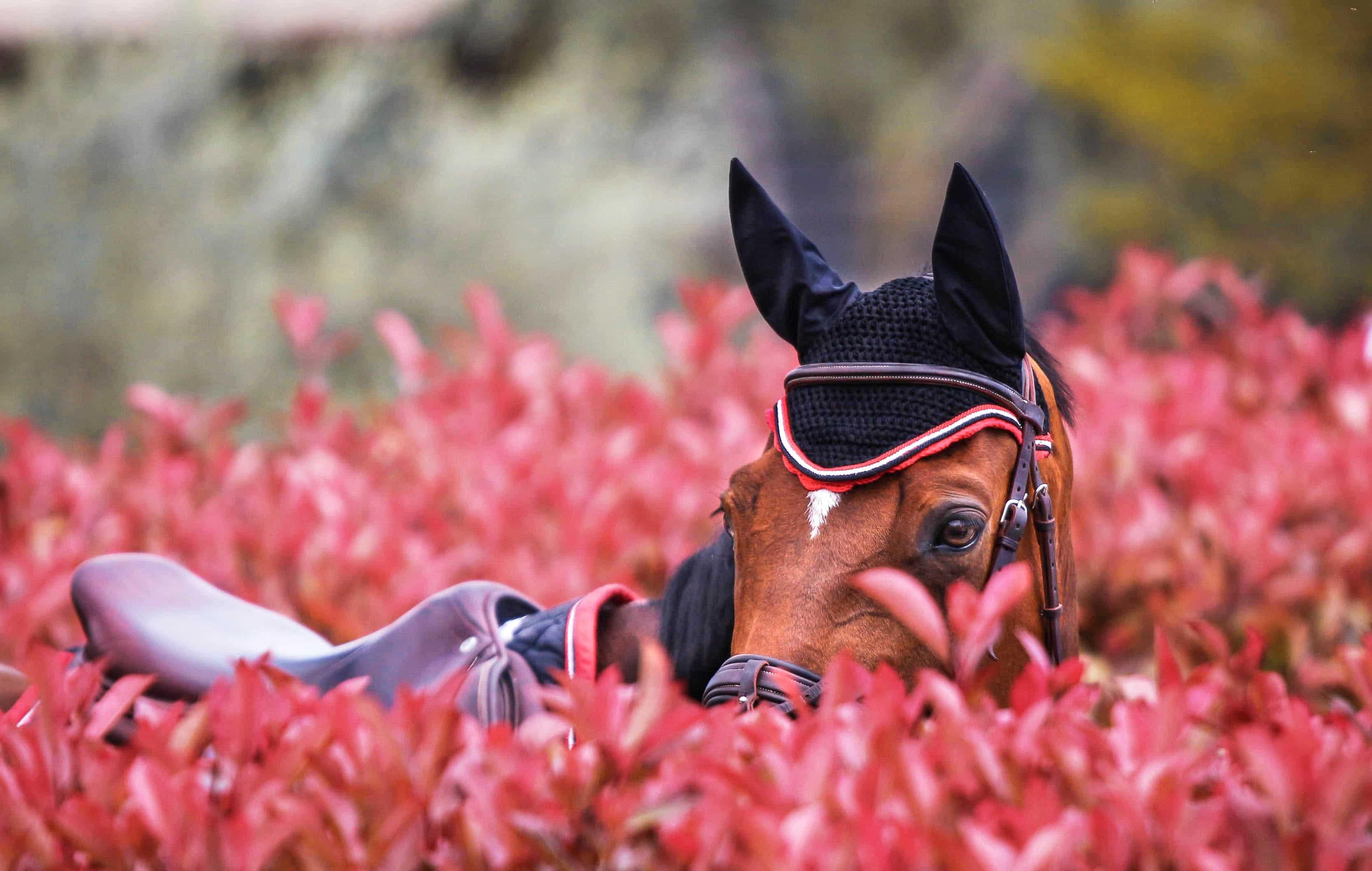 portrait equestre france
