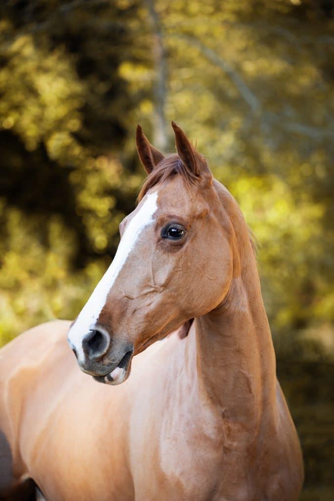 saisir-linstant-chevaux