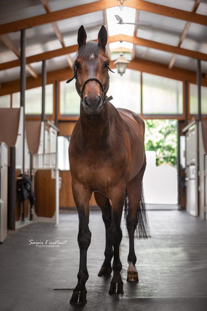 photographe-ecurie-roquebrune