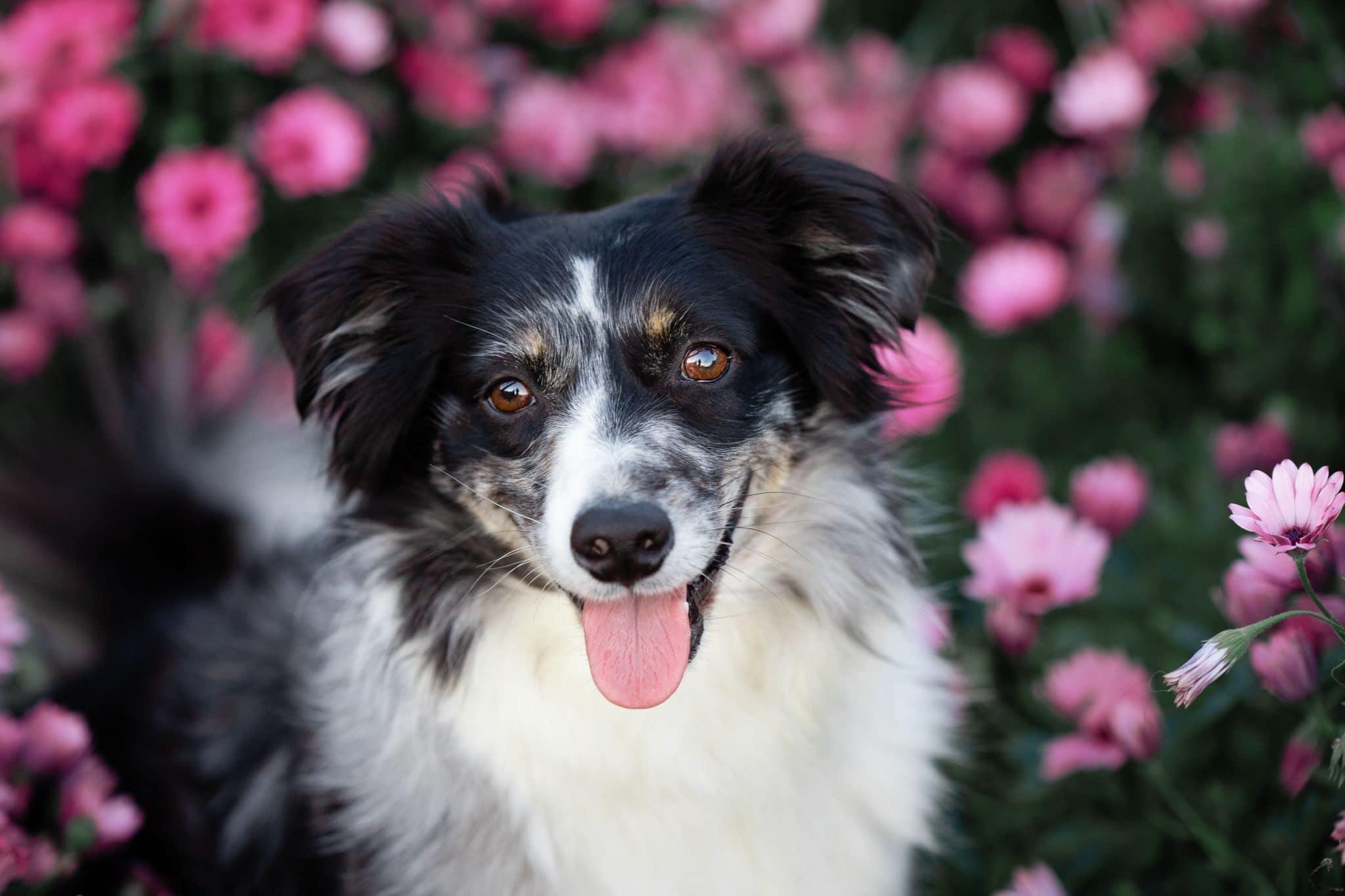 photographe-canin-frejus