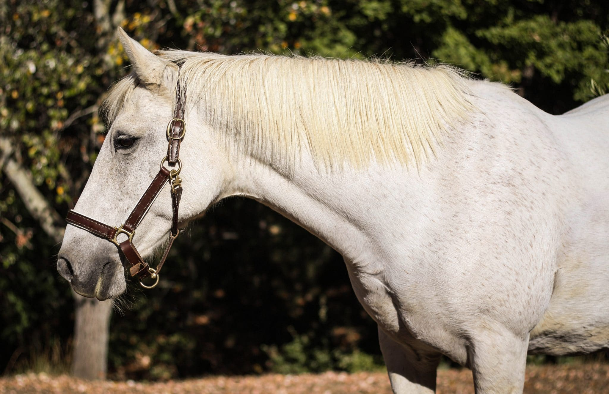 photographe-cheval-var