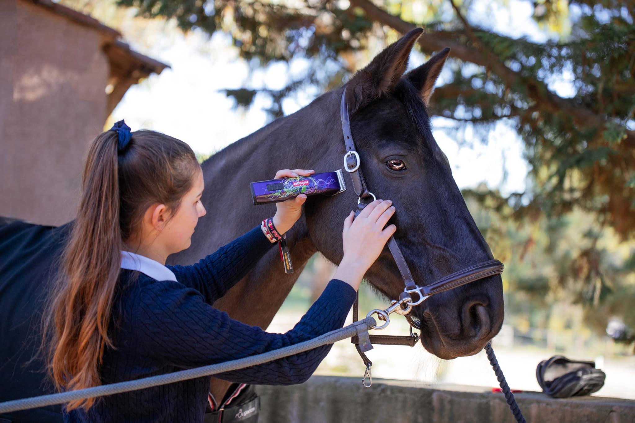photographe-metier-equestre