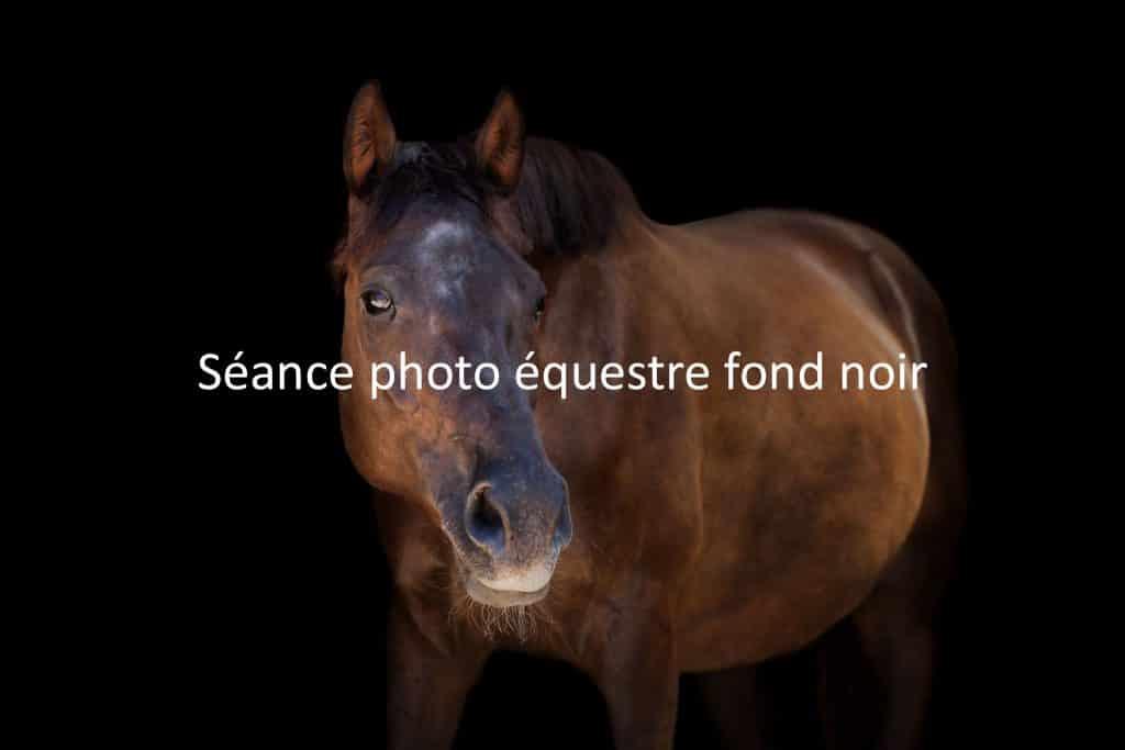 portfolio-studio-cheval
