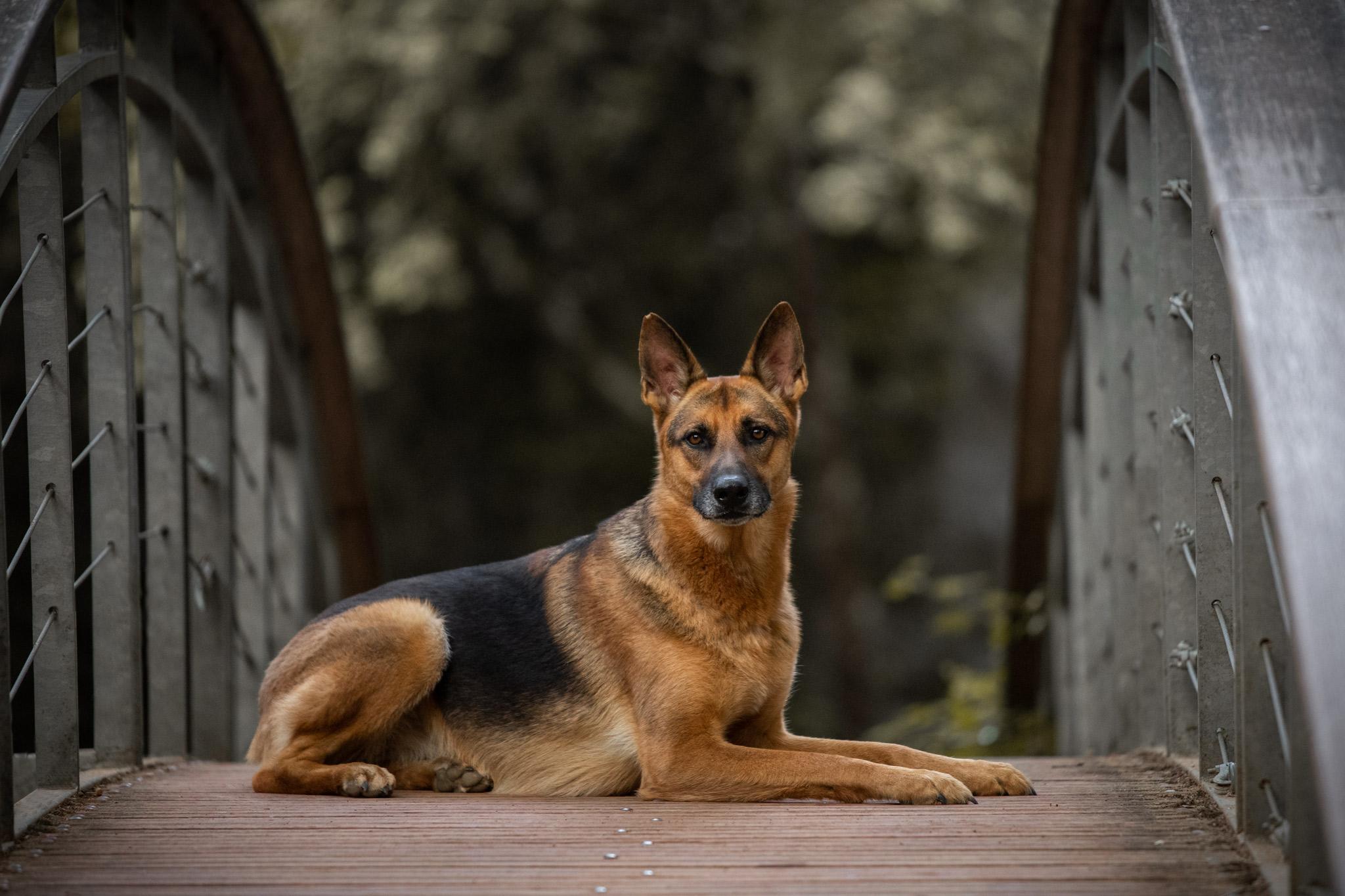 1 an en tant que photographe professionnelle chien