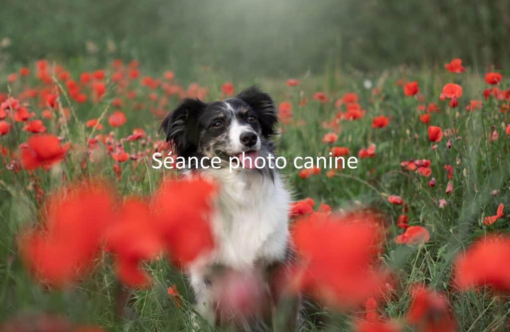 seance-photo-chien