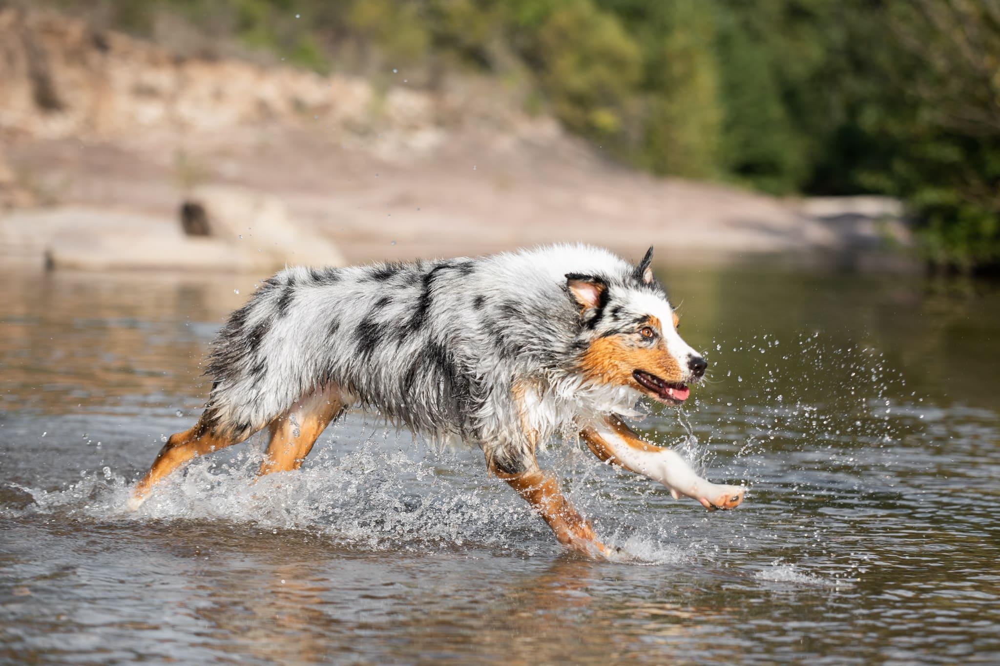 dog-action-var