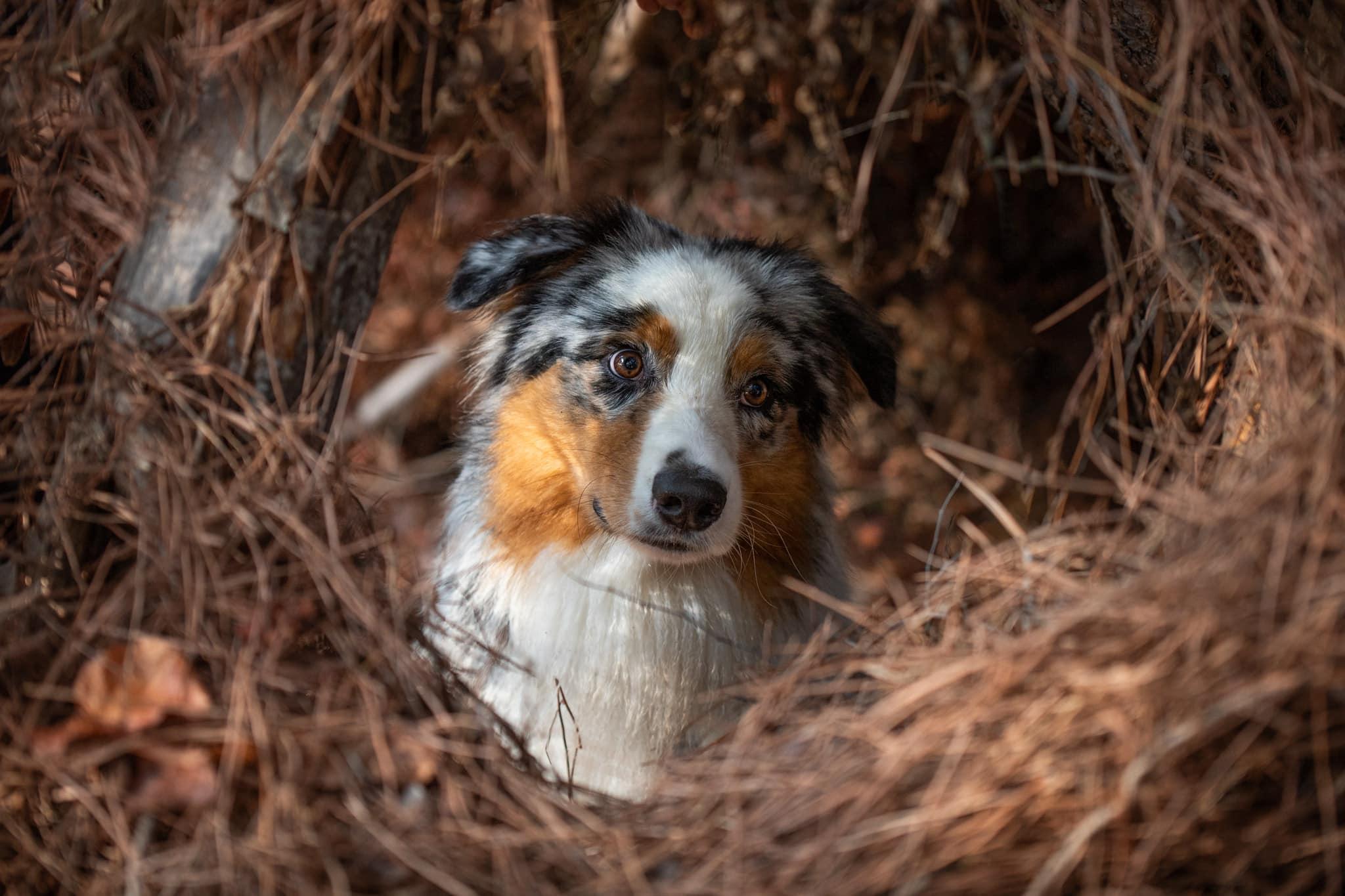 shooting-canin-roquzebrune