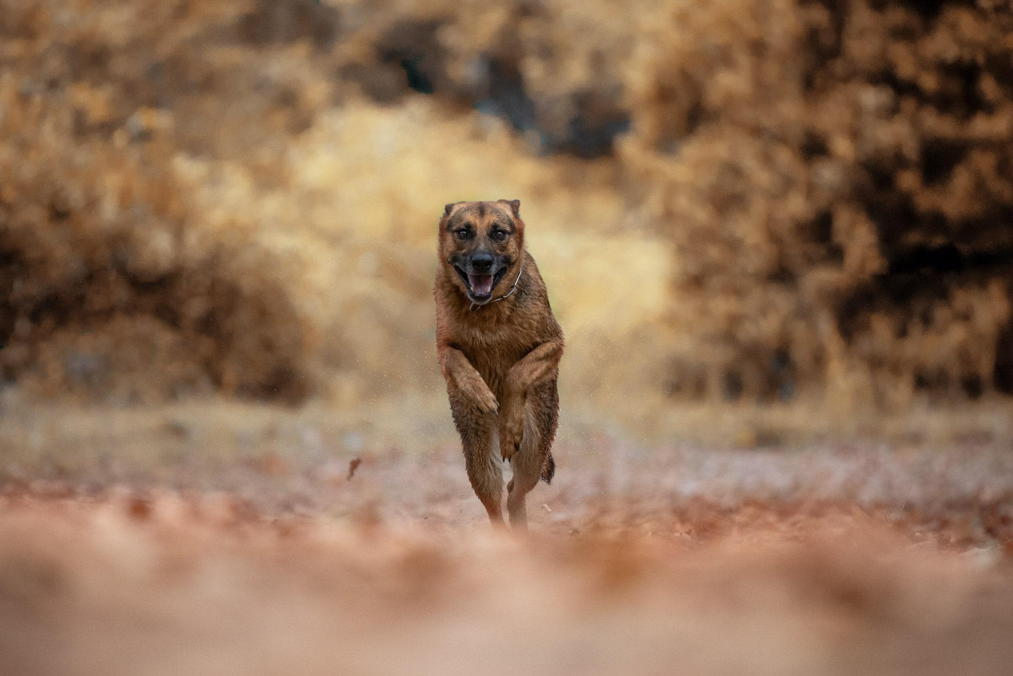 shooting-chien-roquebrune