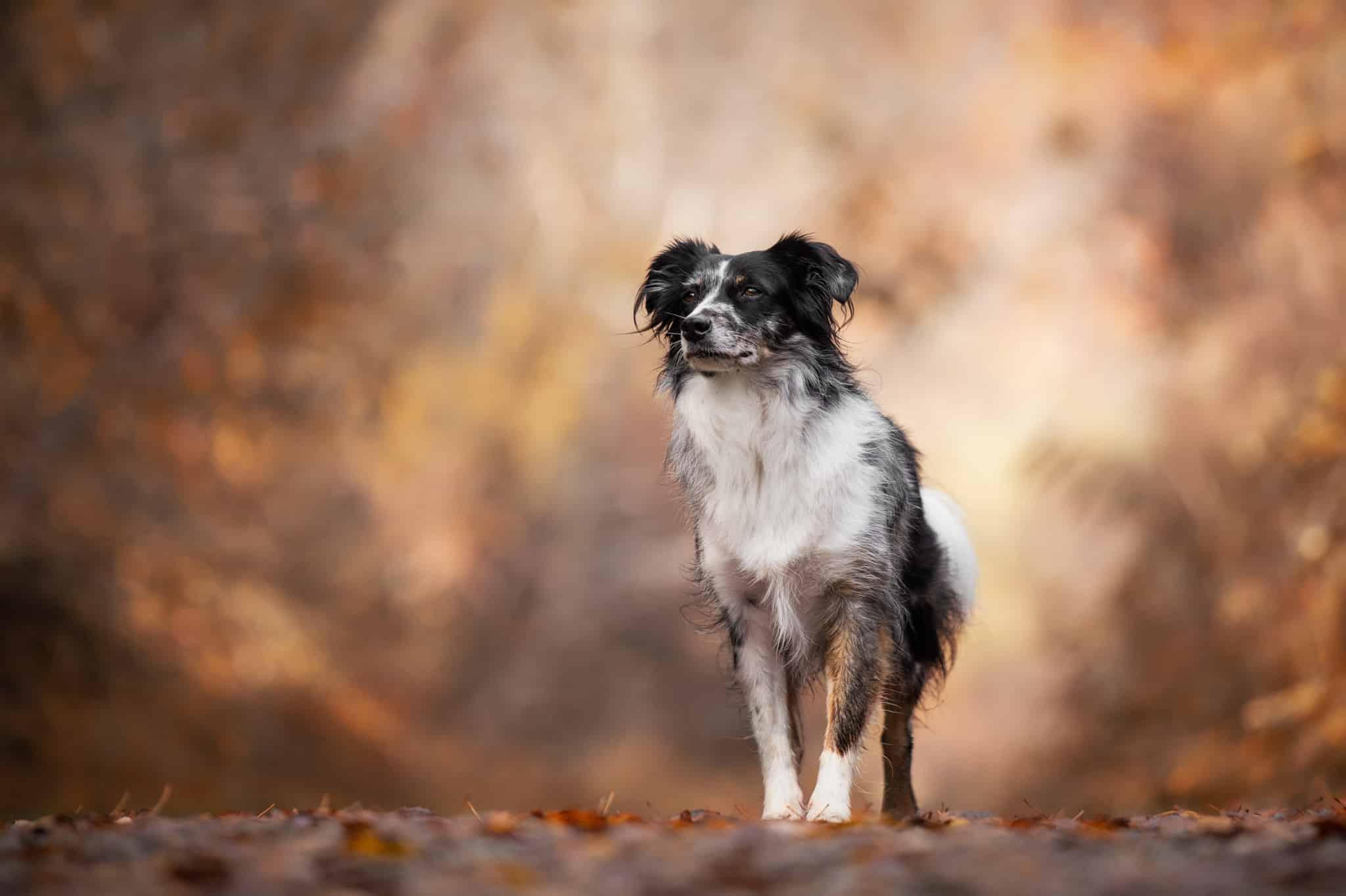 photographe-frejus-chien