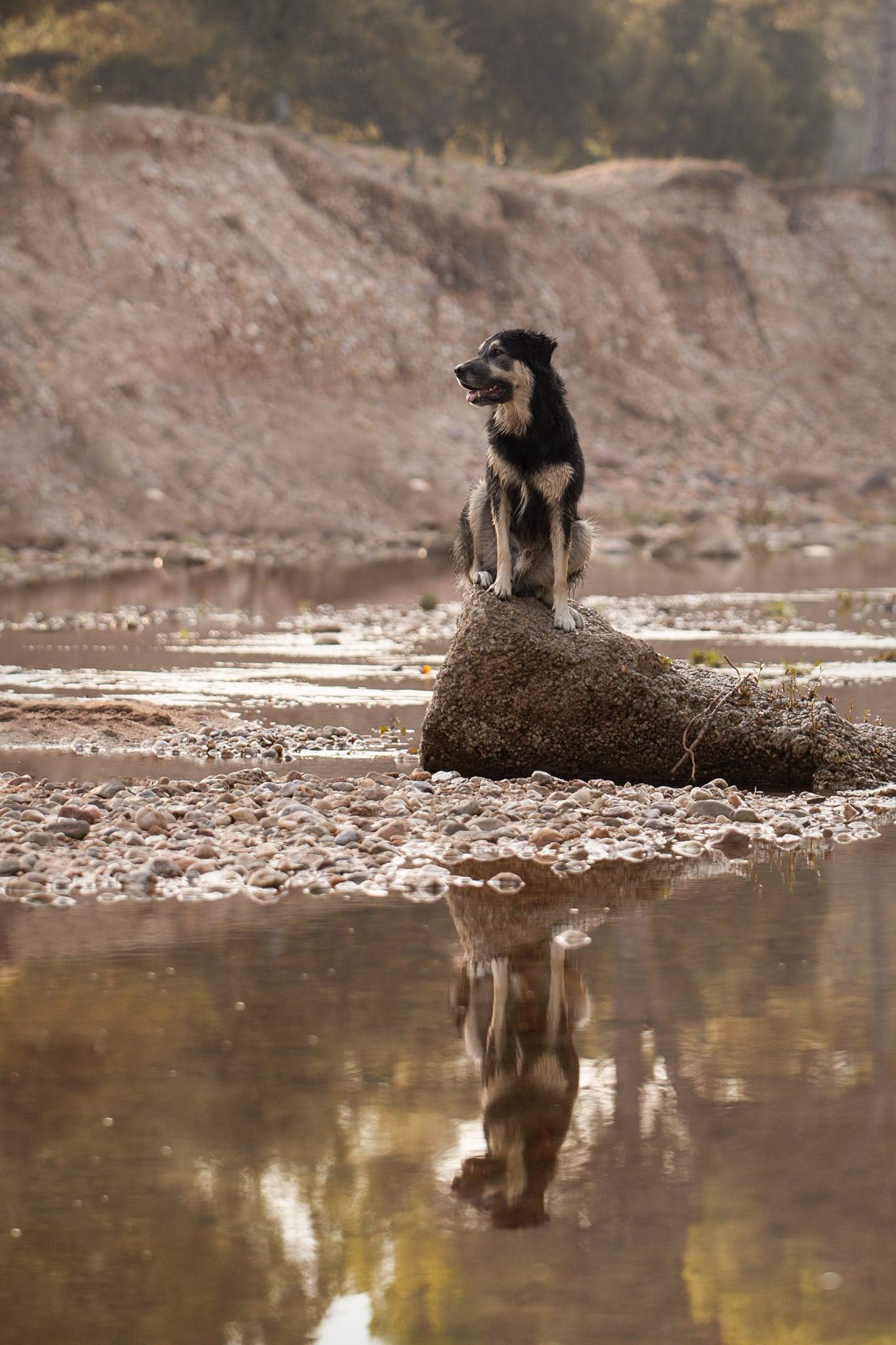 photographe-canin-paca