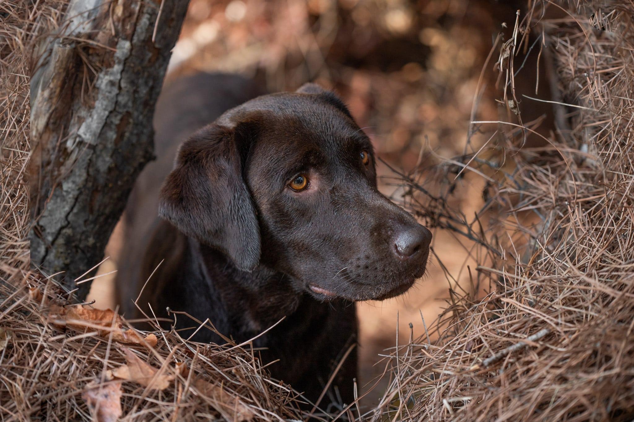 séance photo animalière avec un chien à Roquebrune sur Argens