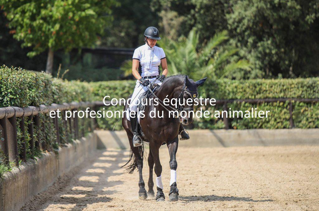 concours-chevaux-professionnels-animaux