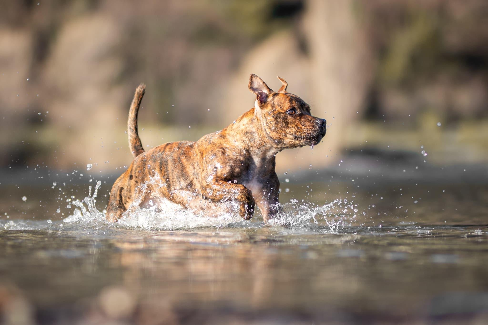 photographe-chien-action