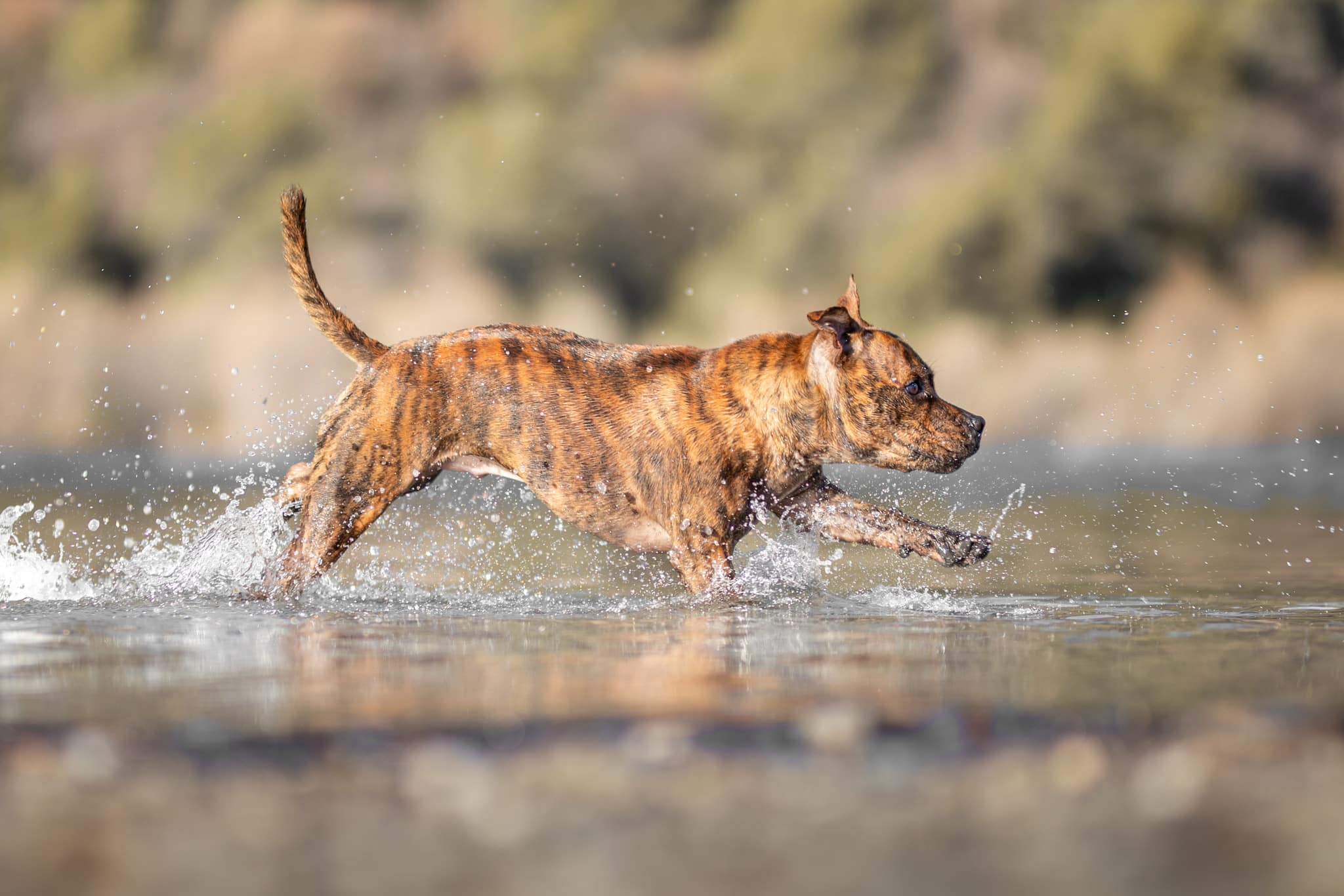 chien-lac-shooting