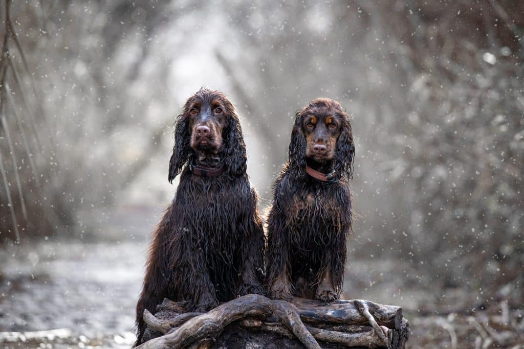 duo-canin-photographe
