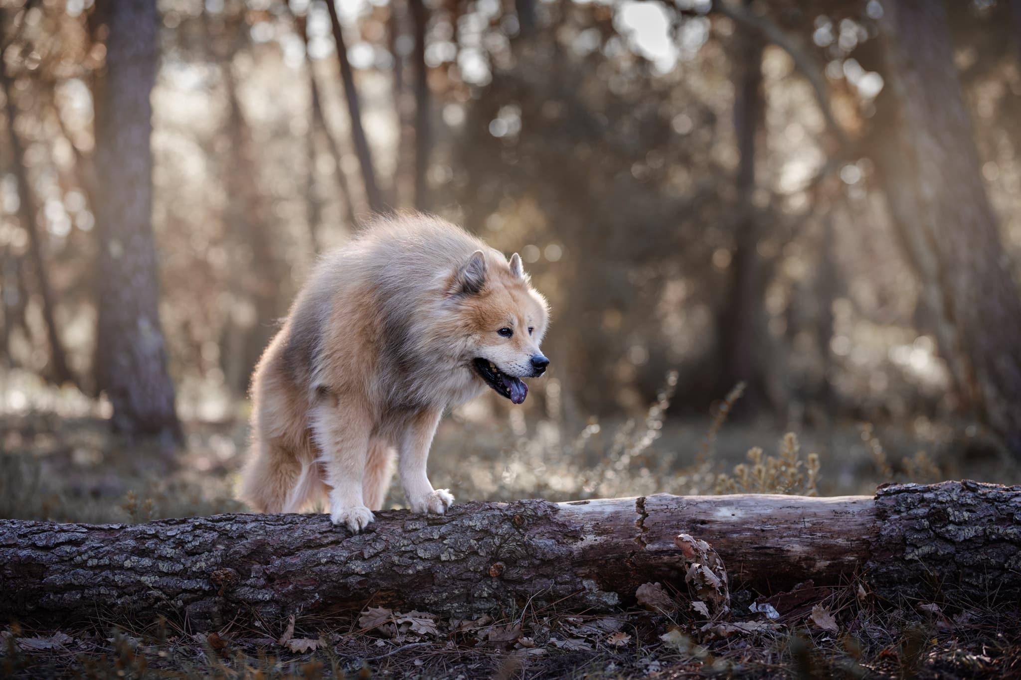 photographe-canin-toulon