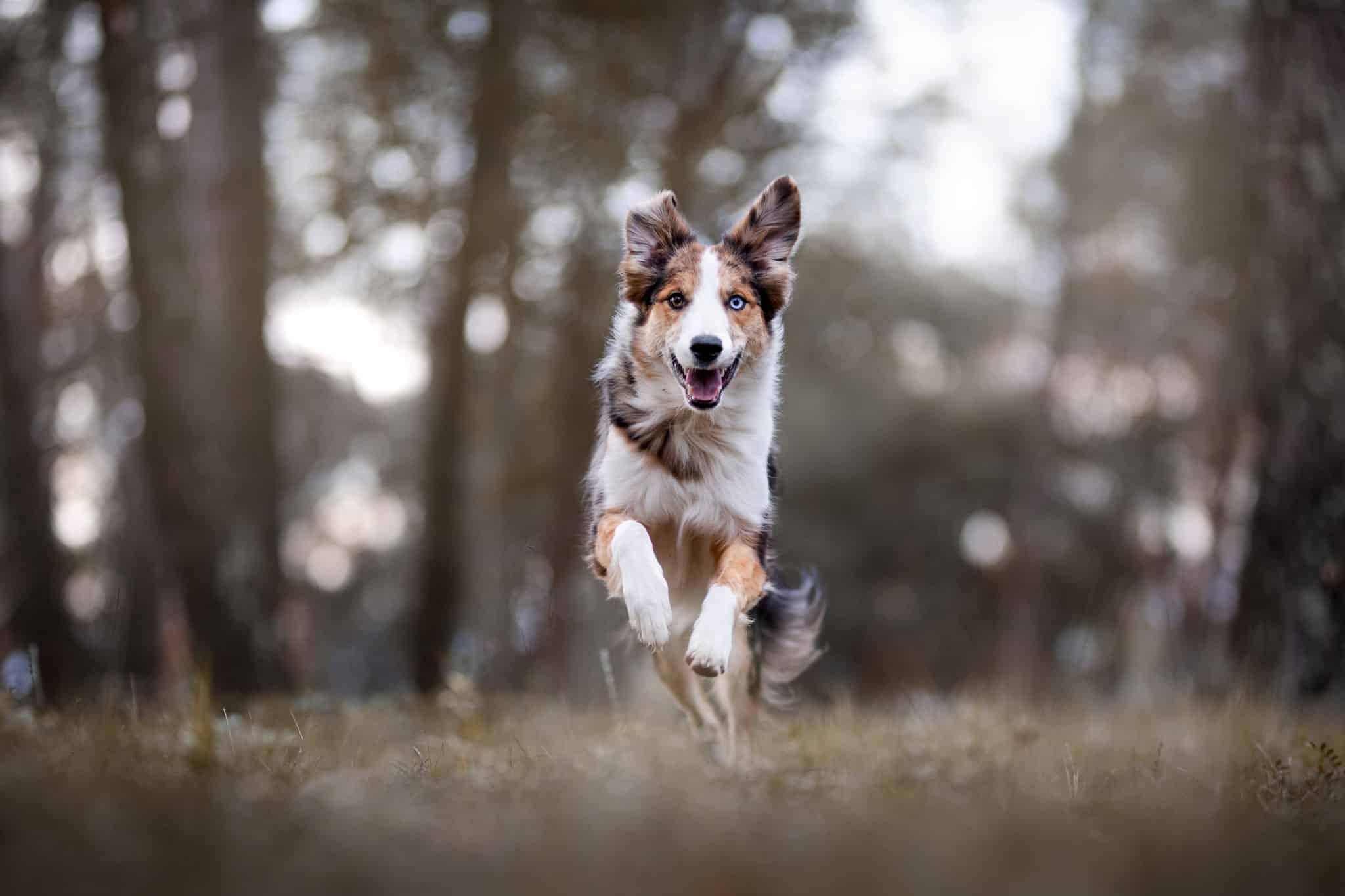 photographe-canin-action