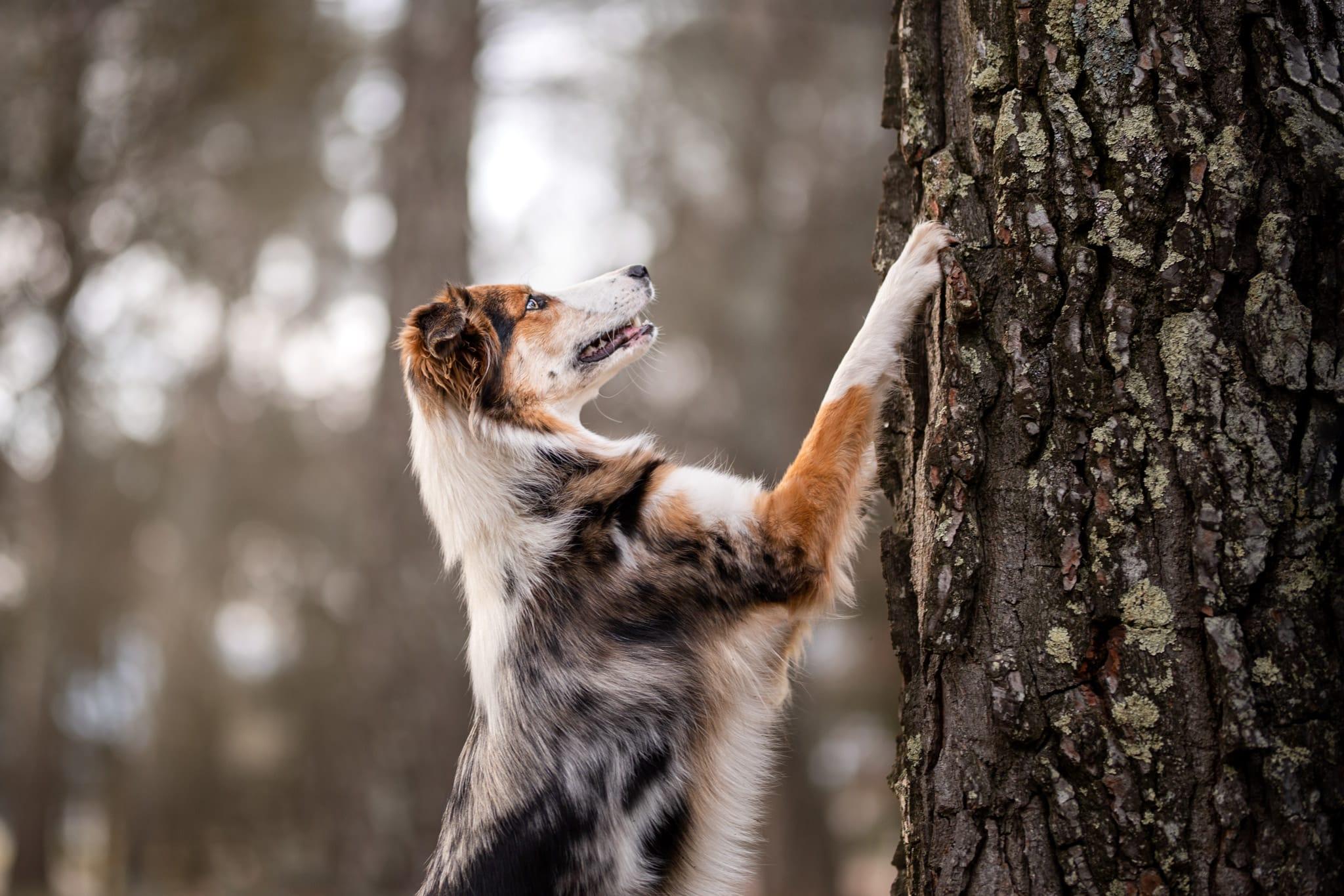 photographe-canin-cannes