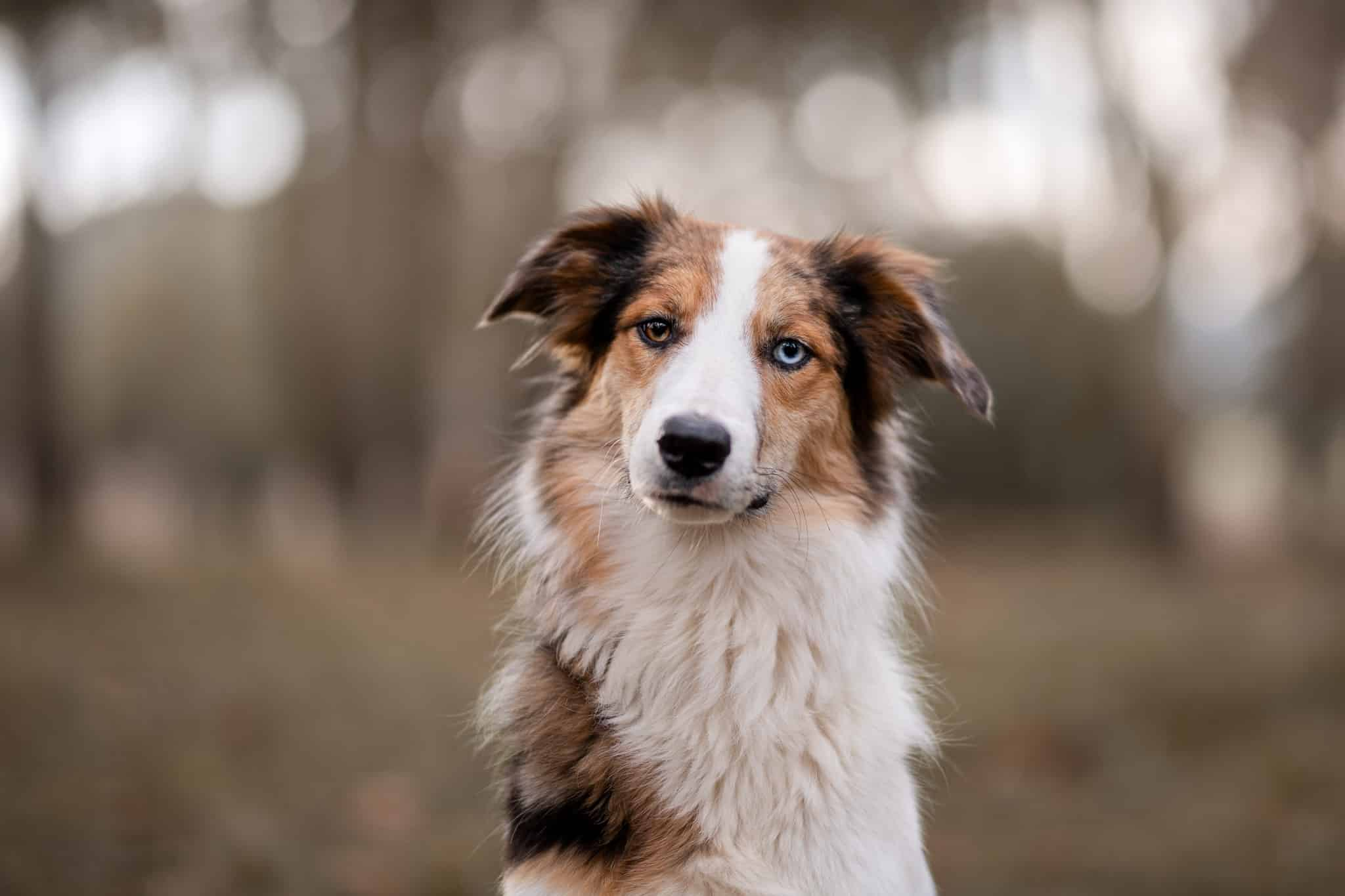 photographe-canin-draguignan
