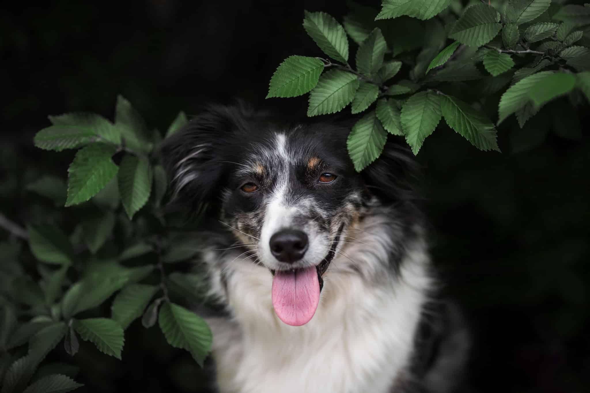 portfolio de photographe animalier spécialisé dans le canin à Fréjus