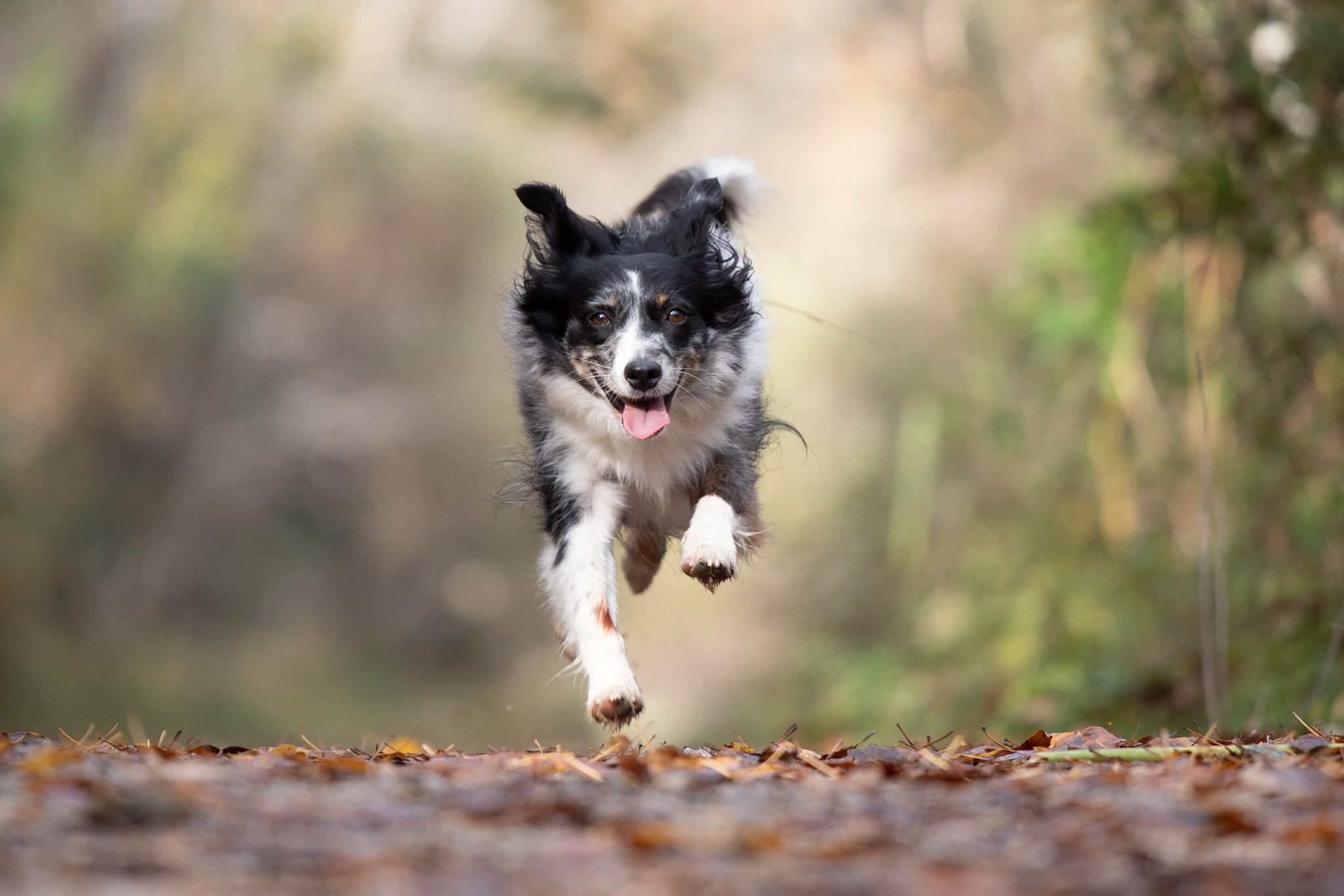 shooting action chien - déroulement d'une séance photo canine