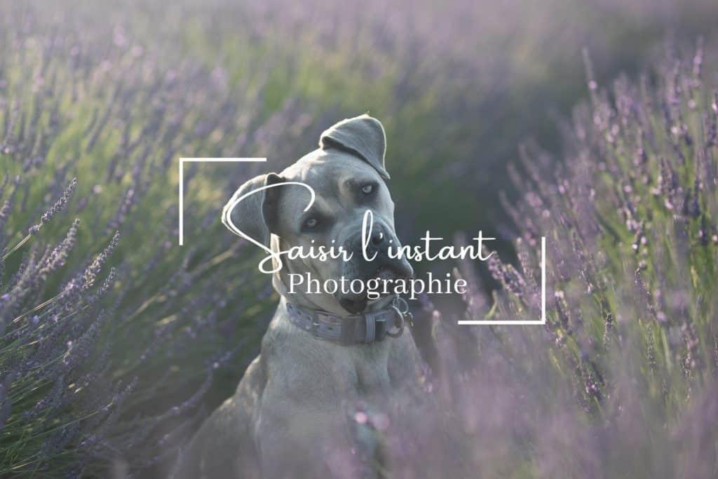 photographe canin dans les alpes de haute provence pour un shooting photo avec un chien