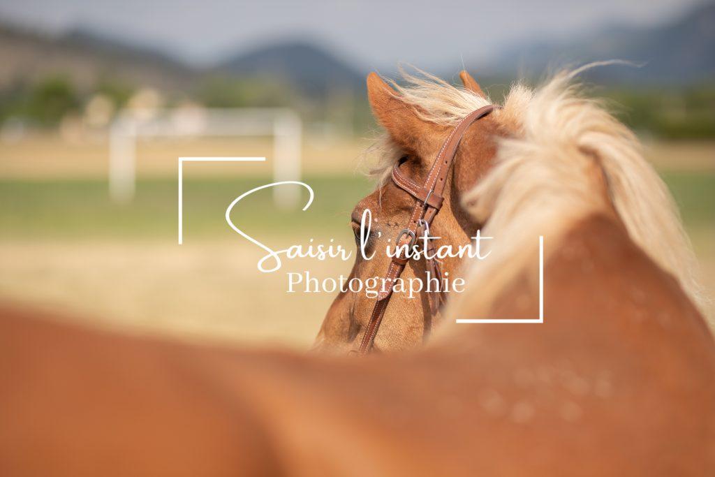 séance photo cheval à Nice