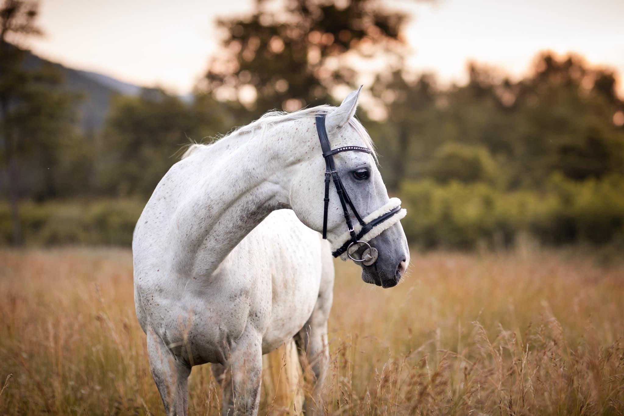 séance photo d'un cheval dans les alpes de haute provence