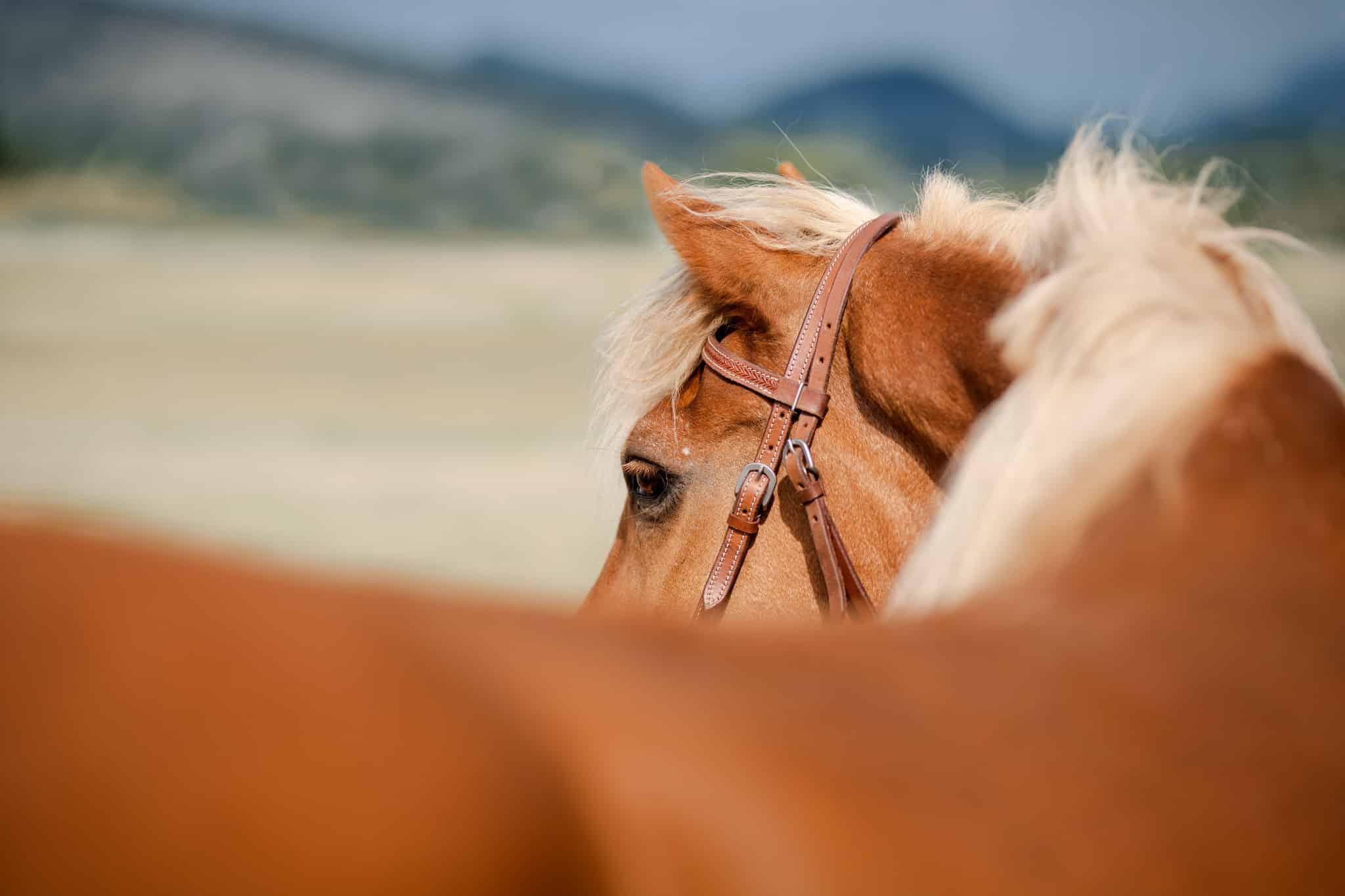 séance photo équine avec un cheval à Fréjus
