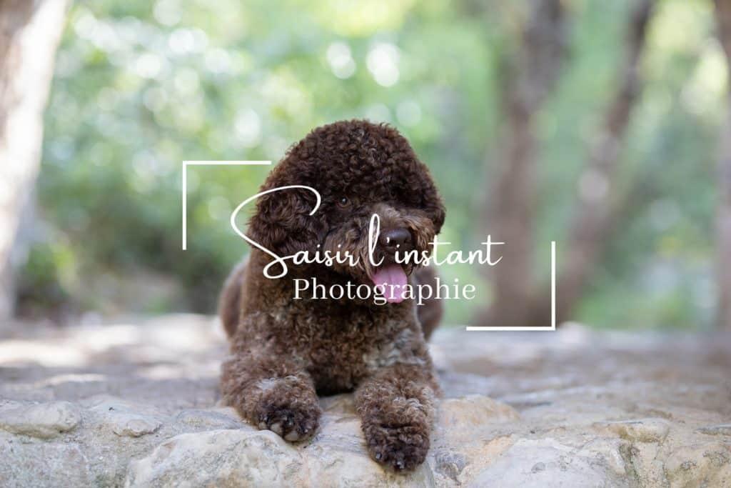 photographe canin à Tourves dans le Var