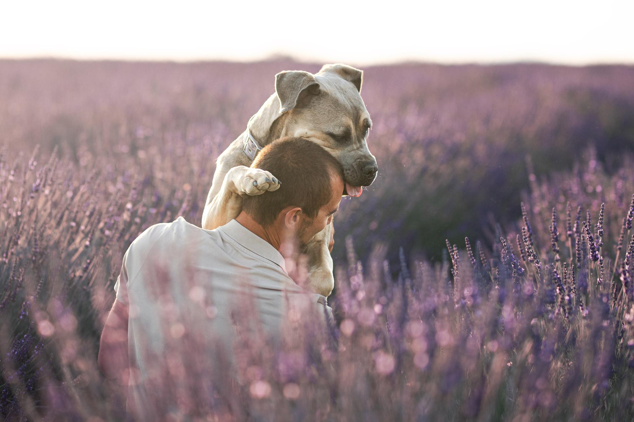 séance photo avec un chien à Valensole