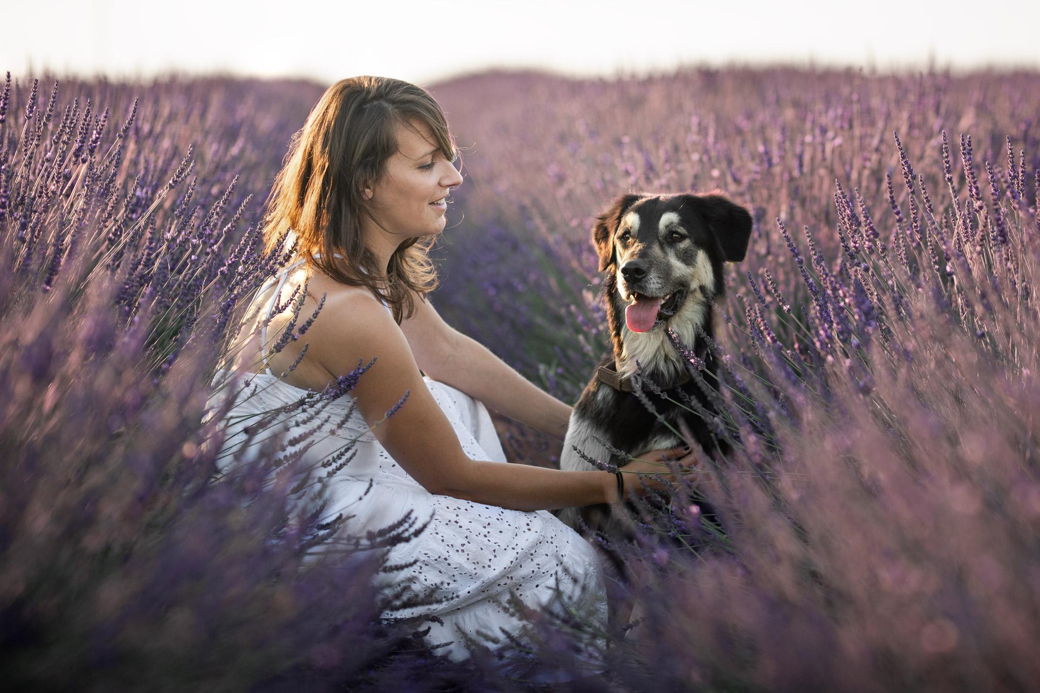 shooting photo avec un chien à Valensole