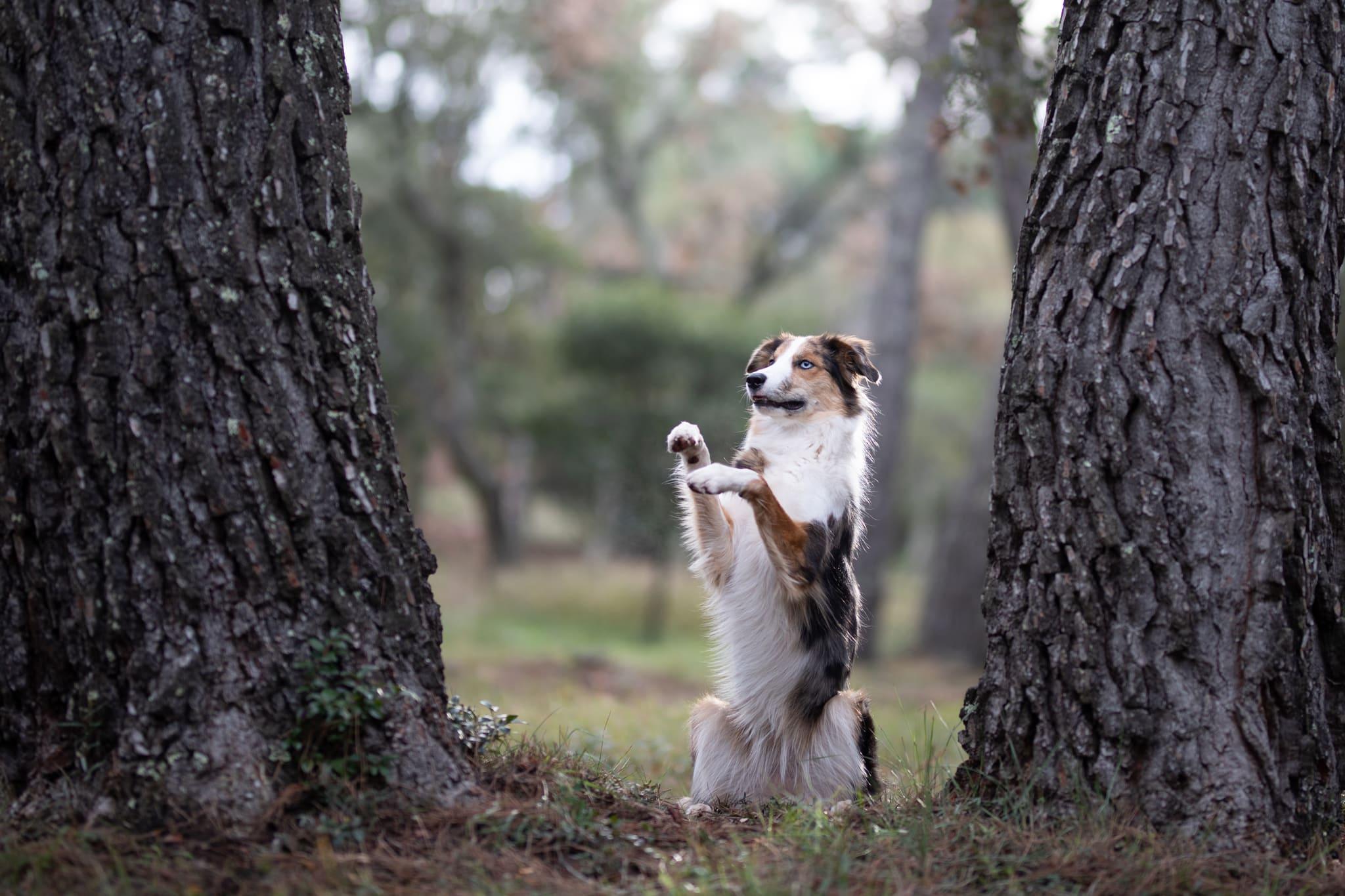 shooting canin roquebune argens - séance photo canine